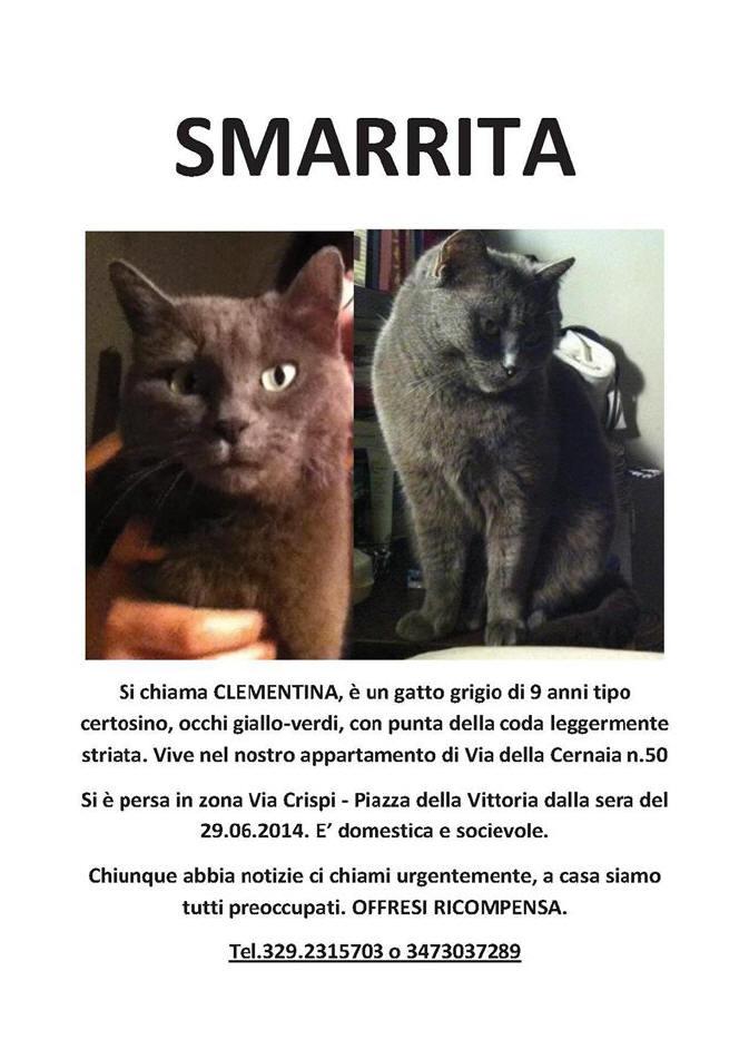Gatti E Cani Smarriti Di Firenze E Dintorni Cane E Gatto